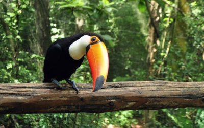 Parque das Aves, Brazil Tour, Toucan