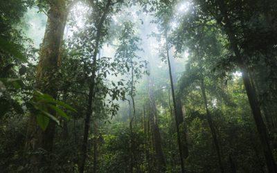 Tijuca National Park Rainforest Brazil Tour