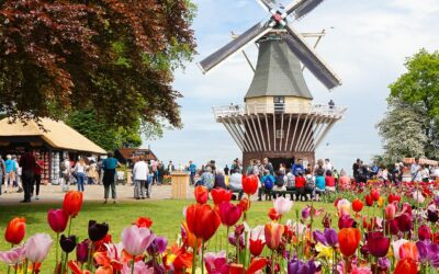 Netherlands Holland Tulips Widmills Keukenhof